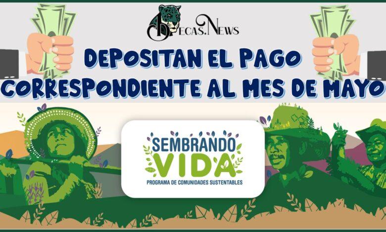 SEMBRANDO VIDA DEPOSITA EL PAGO CORRESPONDIENTE AL MES DE MAYO